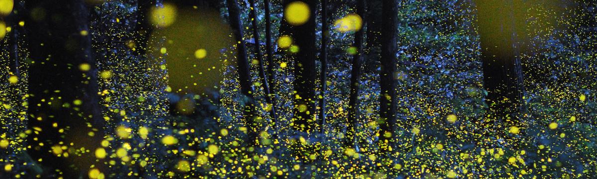 Meditation with Fireflies